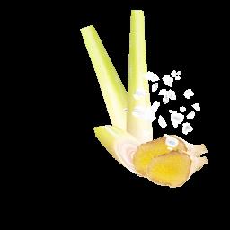 Meersalz Ingwer Zitronengras